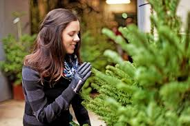 christmas tree store locations pines and needles