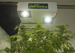 magnetic induction grow lights u0026 plasma grow lights do they work