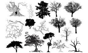 best 15 gma set all prv trees photos