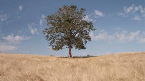 what was the tree of the knowledge of and evil for