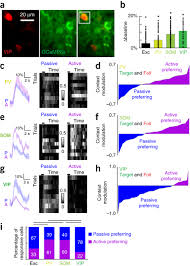 parallel processing by cortical inhibition enables context