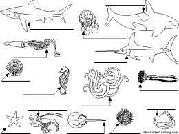 ocean animals using the word list below animal printouts 549159