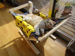 Cool Cat Furniture How To Keep Cats Cool Healthy Paws Pet Insurance