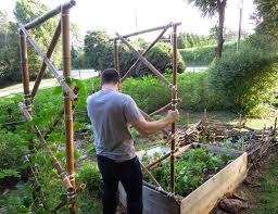 Bamboo Cucumber Trellis Creating A Florida Weave Tomato Trellis This Natural Dream