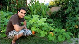 butternut squash growing tips youtube