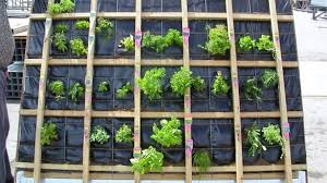 stylish inspiration how to make a living wall with pallet