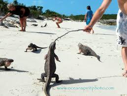 Iguana Island Travels With My Love Sheree U0027s Warm Fuzzies