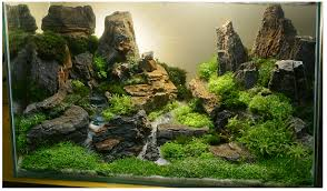 Aquascaping Techniques Types Of Design