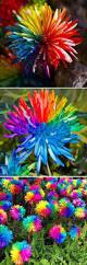 best 25 flower seeds ideas on pinterest succulent seeds