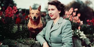 queen elizabeth dog the queen s last remaining corgi has just died