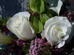 White Rose Furniture Free Images Table White Flower Petal Bouquet Vase Rose