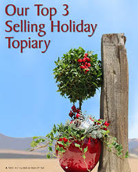 christmas topiary christmas topiaries plants ideas for home decoration