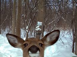 New York wildlife images Wild cam where are fishers found in new york state the jpg