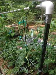 Tomatoes Trellis Tomato Cages You Can Build Gardensall
