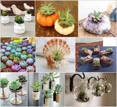 15 wonderful single succulent planter ideas