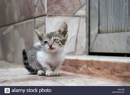 baby kitty rocinha favela community rio janeiro