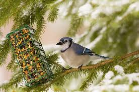 9 types of bird seed for your backyard blain u0027s farm u0026 fleet blog