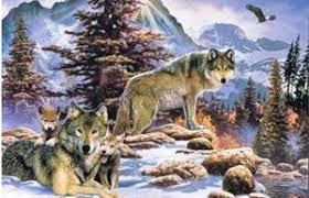 wolf family christmas card