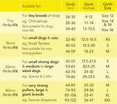 australian shepherd size chart perfect fit size guide