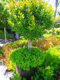 design inspiration landsdale plants