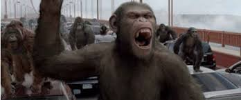 Planet Of The Apes Meme - rise of the planet of the apes sequel gets title 2014 release date