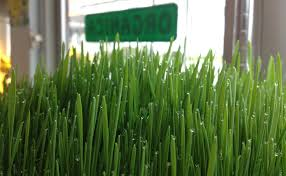 organica garden supply u0026 hydroponics albany bitcoin airbitz