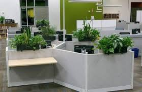 best plant for office leasing indoor plants plant friends llc