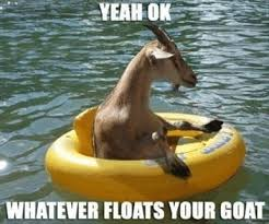 Whatever Memes - whatever floats your goat funny meme of a goat in a tube
