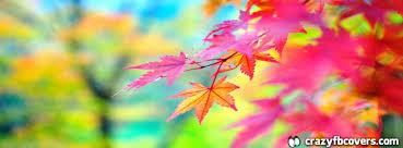 beautiful colorful autumn leaves cover