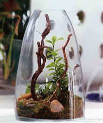 feng shui home decor with miniature indoor house plants