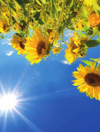 Leiner Schlafzimmer Calgary Sommer Sonne Sow Shin Pdf
