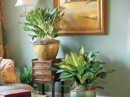 the easiest houseplant southern living