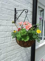 hanging basket plants best flowers for hanging baskets
