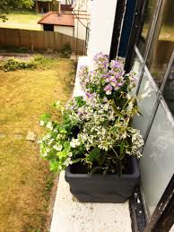 Window Flower Boxes How To Plant Easy Window Flower Boxes For Your Apartment U2014 Sarah