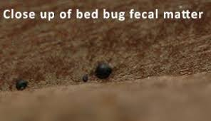 Small Black Bugs In Bed Control Of Bed Bugs In Residences U2013 Information For Pest