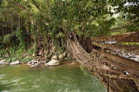 What Is Root Bridge 8 Things To Do In Padang Sumatra Travel Photography Blog By