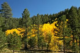 New Mexico forest images Santa fe national forest photo flurries jpg