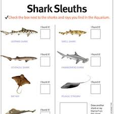 classroom resources from the monterey bay aquarium