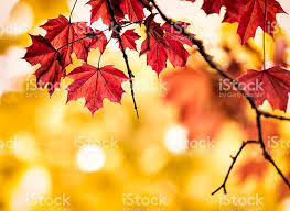 autumn pictures images and stock photos istock