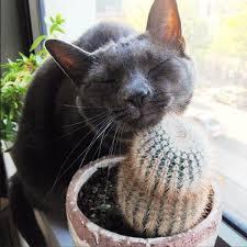 best 25 toxic plants for cats ideas on pinterest plants toxic