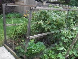 skippy u0027s vegetable garden berry net