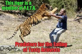 Tiger Meme - peta tiger memes imgflip