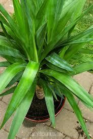 Types Of Indoor Plants If House Plants Could Talk Twelveoeight