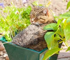 discover your green thumb in apartment gardening