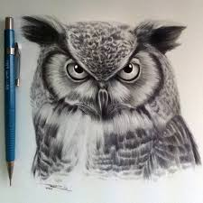 realistic owl drawing owl drawing lethalchris on deviantart