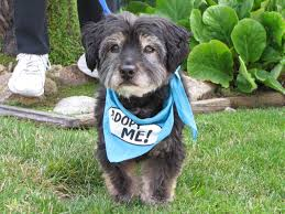 adopt a family for thanksgiving they only get better with age adopt a senior dog with the