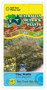 australian native plants for clay soil australian native plant nursery u2014 australian outback plants