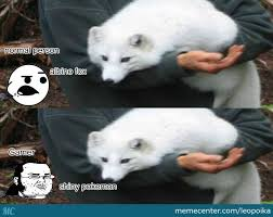 Albino Meme - albino fox by leopoika meme center
