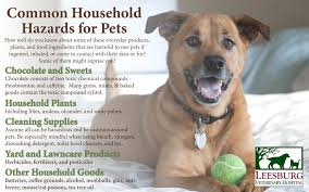 common household hazards for pets many products foods and