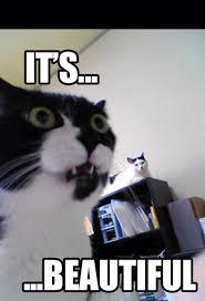 So Beautiful Meme - it s beautiful meme cat memes pinterest beautiful meme